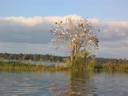 Wando River Bird Tree